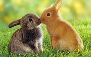 ПРодам Кроликов Уток